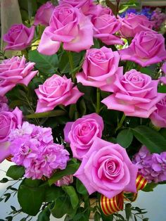 Pink roses for Cancer awerness mont! Beautiful Flowers Garden, Beautiful Roses, Pretty Flowers, Beautiful Gardens, Pink Roses, Pink Flowers, Flower Meanings, Types Of Flowers, My Flower