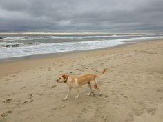 Dog friendly beaches in N.C.