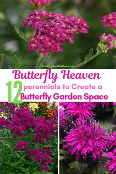 12 Perennials That Butterflies Find Irresistible - Finding Sea Turtles - - Plant perennials butterflies find irresistible. Love butterflies in the garden? Grow plants with blooms that butterflies find irresistible. Shade Perennials, Flowers Perennials, Planting Flowers, Perrenial Flowers, Tall Perennial Flowers, Partial Sun Perennials, Best Perennials, Flowering Plants, Garden Care