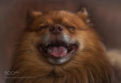 Don't make me laugh..... by Toontjeton via http://ift.tt/2oovaSg