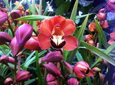 Orchids at the Botanical Garden's Orchid Show #nyc