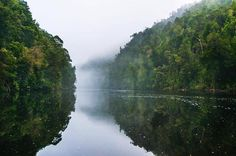 Morning mist floating down the Gordon River on Tasmania's West Coast. Image sent in by Peter Hendrie.