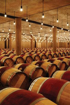 French oak barrels in the château's Latour aging cellars