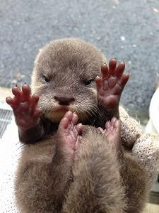 1190 Best Otterly Adorable Images In 2019 Fluffy Animals Otters