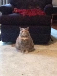 This grumpy chubster lives in a house I do work in. She folows me around and glared at me till I let her- its the best. (i.redd.it) submitted by unimatrix_zer0 to /r/Delightfullychubby 5 comments original   - #Funny #Cats - Cute Kittens - LOL #Purrito Memes - #Pets in Clothes - Kitty Breeds - Sweet Animal Pictures by Visualinspo