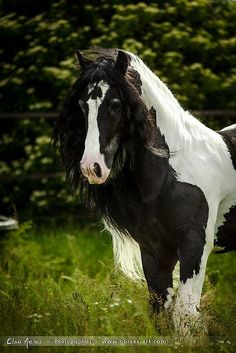 I love animals. Especially horses and puppies. So, except for 1 momentary lapse in judgement, animals are what you will see here. All The Pretty Horses, Beautiful Horses, Animals Beautiful, Horse Photos, Horse Pictures, Welsh Pony, Gypsy Horse, Horse Wallpaper, Horse Shirt