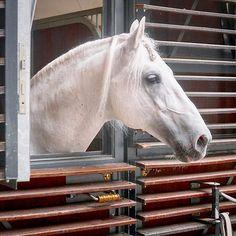 Leica, Horses, Explore, Photo And Video, City, Animals, Instagram, Animales, Animaux
