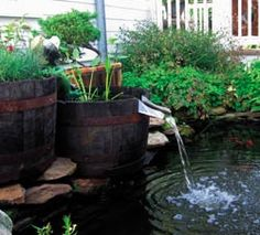 Rain barrel pours into pond.