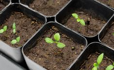 You can sow and plant that in January - Garden Care, Garden Design and Gardening Supplies Hydroponic Farming, Hydroponic Growing, Hydroponic Gardening, Hydroponics, Indoor Gardening, Garden Care, Gardening Supplies, Plantas Indoor, Herb Planters