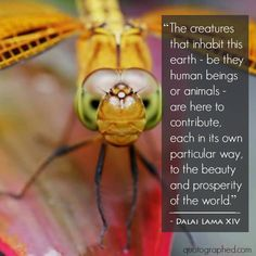 """Quotes About #Animals - """"The creatures that inhabit the earth - be they human beings or animals - are here to contribute, each in its own particular way, to the beauty and prosperity of the world."""" - Dalai Lama XIV #Nature #Beauty"""