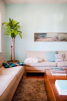Dracaena: The Tall, Chic, Air-Cleaning Tropical Plant (That's Actually Easy to Grow)