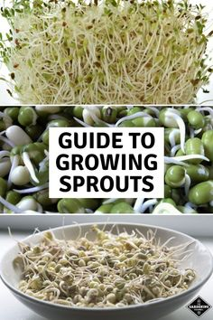 5 Easy Ways to Grow Your Own Sprouts &; Gardening Channel 5 Easy Ways to Grow Your Own Sprouts &; Gardening Channel My Homestead Life Bean Sprouts Growing, Growing Beans, How To Grow Sprouts, Fruit Plants, Fruit Garden, Garden Seeds, Types Of Vegetables, Growing Vegetables, Veggies