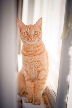 Yellowfur. She cat. Warrior. Mated to Clawfoot. Mother of lightkit, cinderkit, Sprucekit.