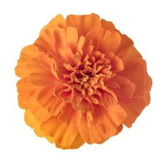 Meaning of a Marigold Flower