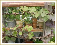 Tijdens onze tuinreis door Vlaanderen hebben wij ook de prachtige tuin van Mevr. Lengton in Nisse (Zeeland) bezocht. De tuin ligt achte...