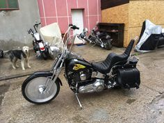 king and queen softail evo rules