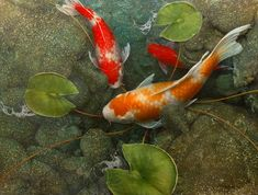The prettiest Koi paintings I've ever seen by Terry Gilecki - hard to pick a favorite