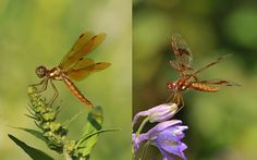 Learn all about dragonflies.