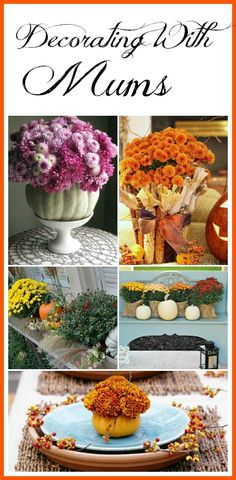 Mums have to be the quintessential flower to use in fall decorating! Pretty ideas for decorating with mums. Fall decorating ideas, fall home decor, fall porch ideas, Chrysanthemums Fall Home Decor, Autumn Home, Autumn Decorating, Decorating Ideas, Decor Ideas, Diy Ideas, Craft Ideas, Fall Mums, Autumn Inspiration