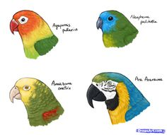How to Draw Parrots, Draw Macaws (Step by Step Tutorial at: http://www.dragoart.com/tuts/14901/1/1/how-to-draw-parrots,-draw-macaws.htm)