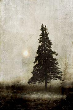 Winter light -Jamie Heiden