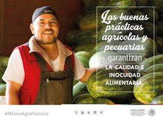 Las buenas prácticas agrícolas y pecuarias garantizan la calidad e inocuidad alimentaria. SAGARPA SAGARPAMX #MéxicoAgroPotencia