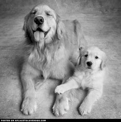 My Mommy • APlaceToLoveDogs.com • dog dogs puppy puppies cute doggy doggies adorable funny fun silly photography