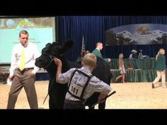 Cattle Showmanship Tips – Sure Champ Source by macy_lewis Livestock Judging, Livestock Farming, Showing Livestock, Cow Tipping, Show Cows, Show Steers, Teacup Pigs, Show Cattle, Beef Cattle