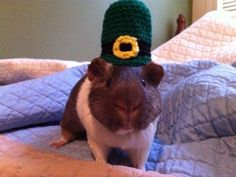 Leprechaun Guinea Pig Hat Costume - The Leprechauns Guinea Pig Saint Patricks Day Top Hat - Fashion Holiday Headwear Accessory