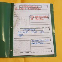 Vocabulary Books via First Grade Shenanigans. I would add synonym and antonym to…