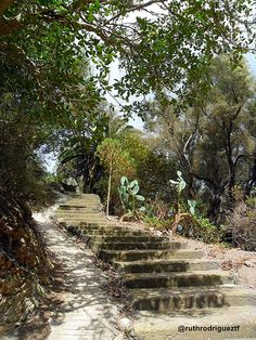 Parque Rural de Anaga, Tenerife http://ruthrodrigueztf.wordpress.com #Anaga #Tenerife