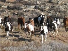 See where Crazy Horse, Hidalgo and Into the Wild movies were filmed on the Black Hills Wild Horse Sanctuary. #BlackHillsWildlife