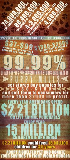 This is a statistic that shows how the puppy mill business works. This picture proves that puppy mills should not be in business and raises awareness that buyers should NEVER buy from pet stores. Statistics, used properly, are always effective in a presentation because it establishes ethos. Source: http://carlylyn.deviantart.com/art/Puppy-Mill-Statistics-155128598 Author: Carly Lyn