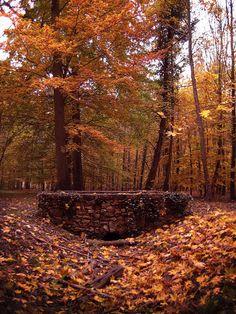 "houseofoctober: "" Autumn by simfonic """