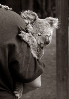 """I used to call my son """"my little koala"""" because of how he used to hold on"""