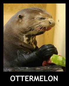 otter watermelon ottermelon his face lol hahahaha clever cute funny