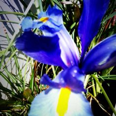 Blue intensity