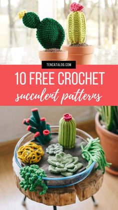Crochet Cactus Patterns 10 Free Crochet Cactus Patterns If You Re Like Me And Cannot Get Enough Of Succulents Or Crocheting For That Matter You Have To Try These 10 Free Crochet Cactus Patterns 10 Free Crochet Cactus Patterns Ten Catalog Diy Crochet Cactus, Crochet Cactus Free Pattern, Crochet Pincushion, Crochet Flower Patterns, Crochet Patterns For Beginners, Crochet Gifts, Cute Crochet, Crochet Flowers, Crochet Toys