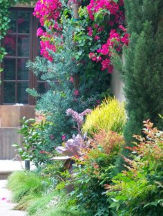 pretty mix of plants along wall - bouganvilla, heavenly bamboo, pencil tree, broad-leaf senna