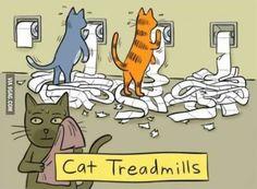 Cat treadmills! Cats doing exercises! Who runs the internet? Cats!