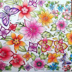 Secret Garden Coloring Book, Coloring Book Art, Coloring Tips, Doodle Coloring, Adult Coloring Pages, Joanna Basford, Johanna Basford Coloring Book, Flower Sketches, Cute Patterns Wallpaper