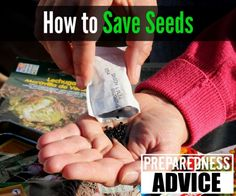 If seeds are stored improperly, they may never germinate. Here's how to store se. - If seeds are stored improperly, they may never germinate. Here's how to store seeds the right way - Tomato Garden, Tomato Plants, Garden Seeds, Planting Seeds, Organic Gardening, Gardening Tips, Sustainable Gardening, Vegetable Gardening, How To Store Seeds