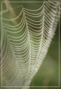 Spiderweb - Delicate Impression of Nature by adrians_art Natural Form Art, Natural Shapes, Patterns In Nature, Textures Patterns, Nature Pattern, Theme Design, Natural Structures, Science Nature, Art In Nature