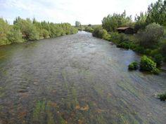 Buena tabla en el #río #Carrión-Palencia, seguro que nos da buenas sorpresas.