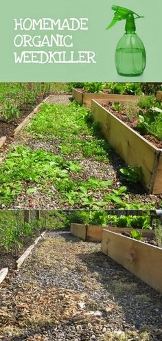 Home-made Organic Weedkiller #Gardening