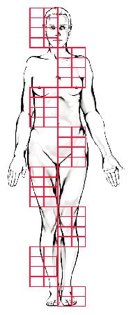 Proportioning the Human Figure. Great reference for all the parts of the body.