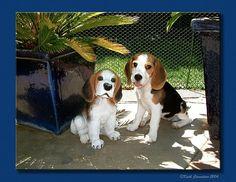 beagle statue by Mr.Honi