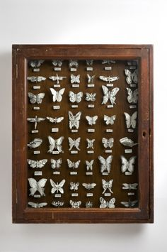 Butterfly Cabinet by Katharine Morling Dimensions: 60 x 75 cm Materials: Antique box, porcelain and black stain Techniques: Hand building image by Stephen Brayne
