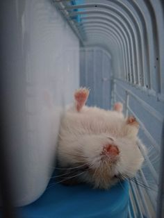 Sleeping little furryhttps://i.imgur.com/AjRlHOJ.jpg