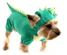 How cute would jasper look in this